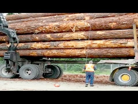 Operate logging trucks in dangerous forests, Big timber trucks - world's strongest load truck