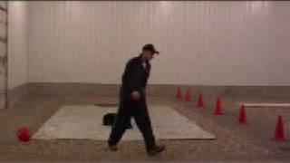 Doberman Pinscher Rocko - Level Iii. Boot Camp Training Graduate