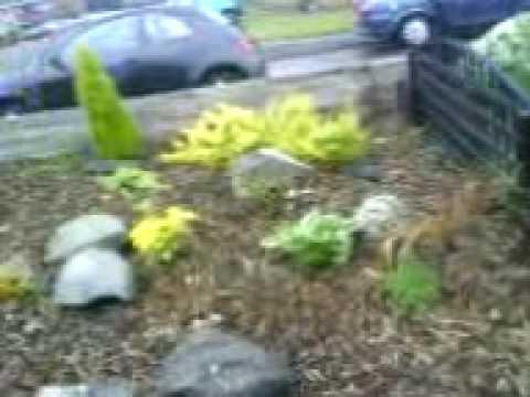 Ducks in my garden? eh?