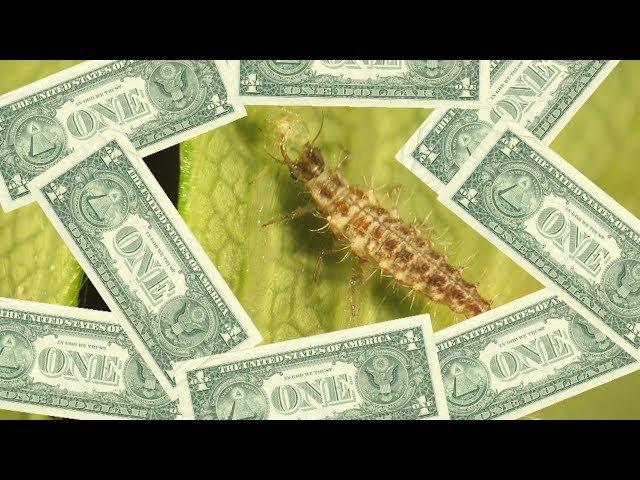 Le biocontrôle coûte-t-il vraiment plus cher ?