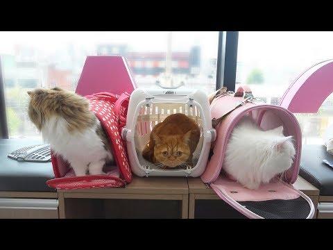 겁 많은 고양이들이 병원에 가면 생기는 일