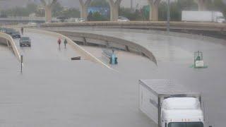 Shark Spotted on Highway During Hurricane Harvey?
