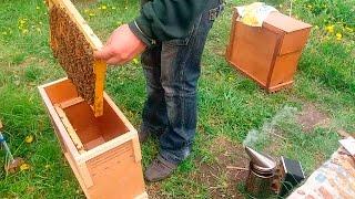 16. Формування бджолопакетів | Формирование пчелопакетов