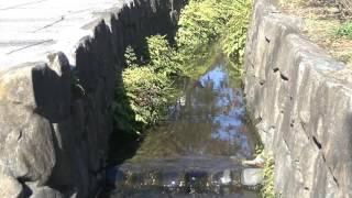 mizu水WATER神領堀親水緑道1 thumbnail