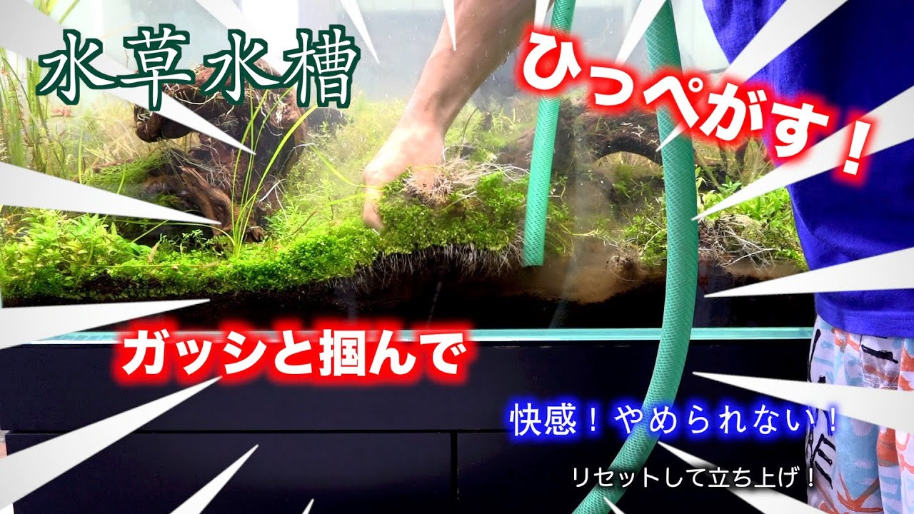 水草をひっぺがす!快感!癖になるそしてリセットして90センチ水槽を立ち上げる。