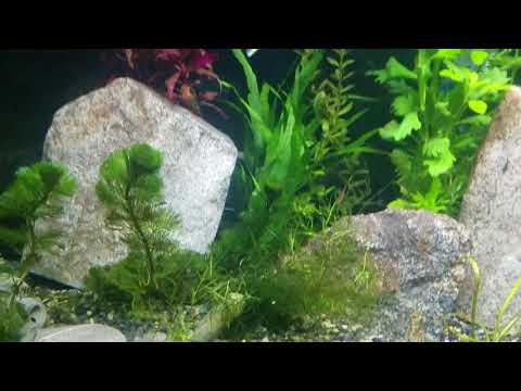 Aquascape Like A Pro - What Rocks Are Safe For My Fish Tank?