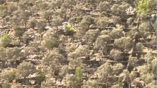 La Serra de Tramuntana, patrimoni Mundial