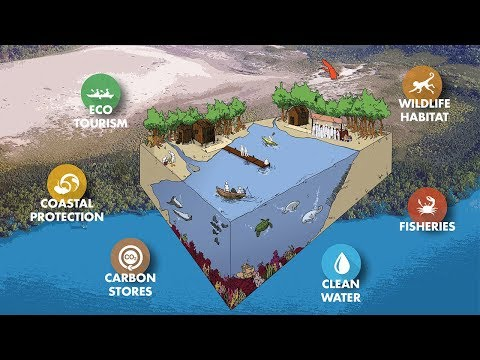 Importance of Mangrove Forests