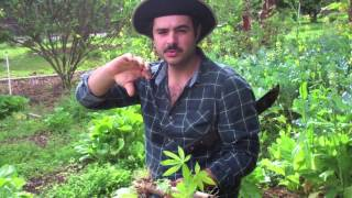 How to Plant Yuca