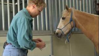 Nurturing horses and business careers