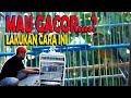 Cara Perawatan Kenari Biar Gacor I Edisi Ramadhan Sentral Kenari  Mp3 - Mp4 Download