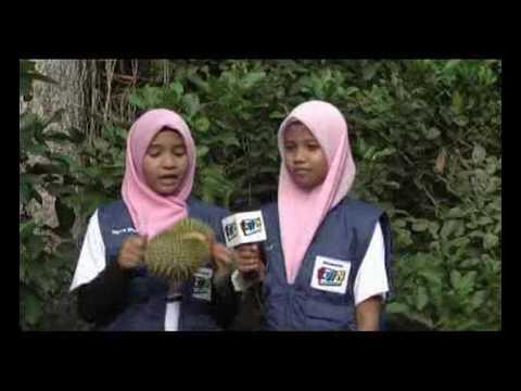 LAGU DURIAN (Durian Song)