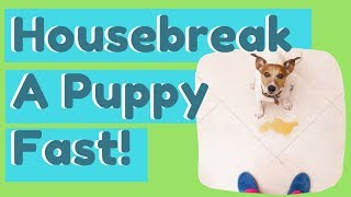 Housebreak A Puppy Fast