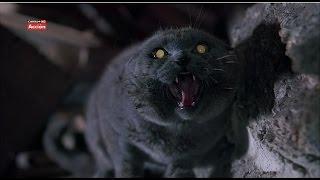 Кладбище Домашних Животных #2. Мертвый кот Черч возвращается домой.