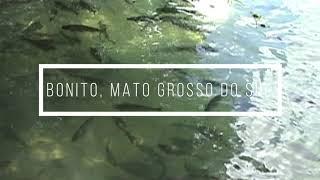 BONITO E O RIO FORMOSO - MATO GROSSO DO SUL