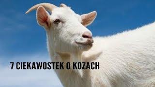 7 ciekawostek o kozach