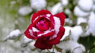Розовая свадьба.wmv