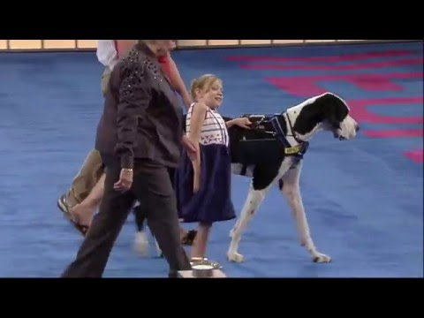 George (Great Dane) - 2015 AKC Humane Fund Awards for Canine Excellence