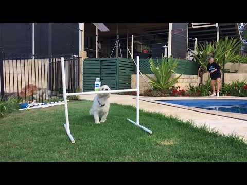 Best Jumping Dog