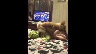 Girl Dog Humping