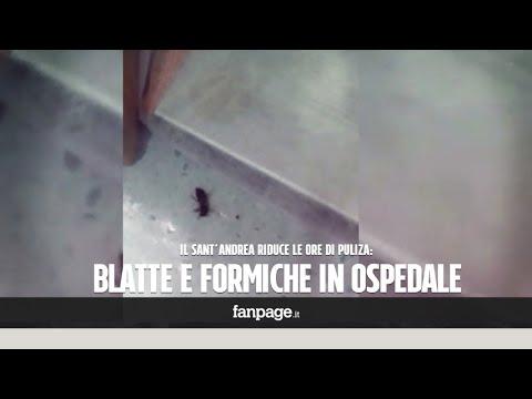 """Blatte, formiche e siringhe nell'Ospedale Sant'Andrea di Roma: """"Ecco cosa accade in sala operatoria"""""""