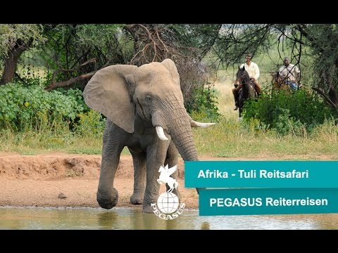 Reitsafaris Botswana - Traumurlaub in Afrika zu Pferd