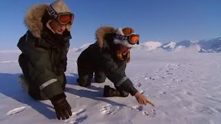 Finding Mothers and Cubs | The Search for Polar Bears | BBC