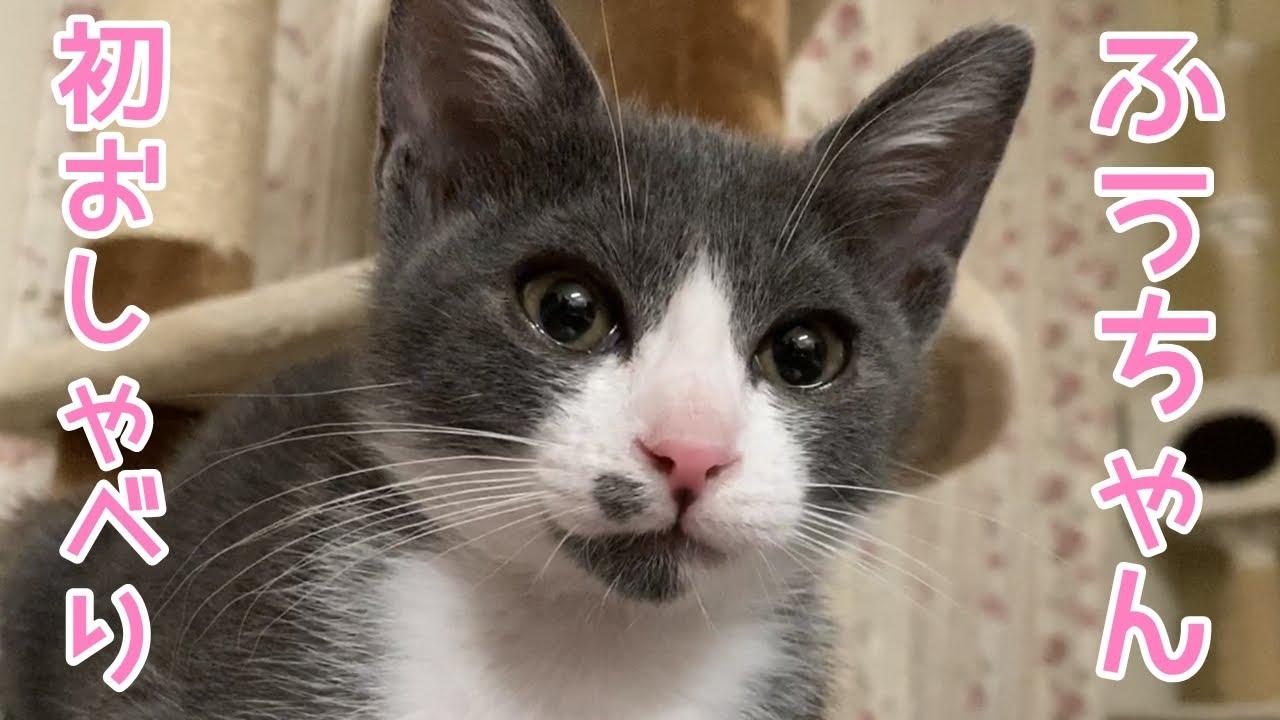 コロナ しゃべる 猫 猫がよくしゃべる6つの理由と伝えたい事
