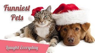 Laugh Everyday - Ultra FUNNY PETS & ANIMALS - Funniest Pets Vines