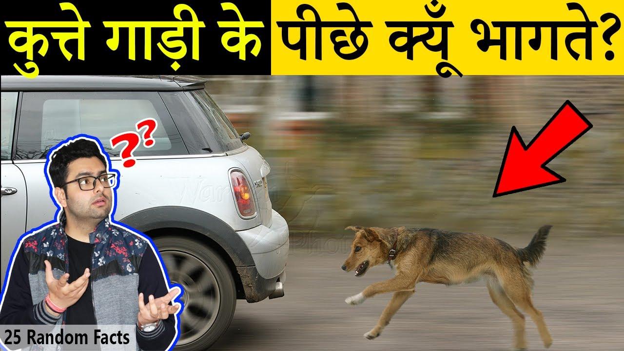 कुत्ते गाड़ी के पीछे क्यूँ भागते हैं? 25 Most Amazing Facts in Hindi | TFS EP 33