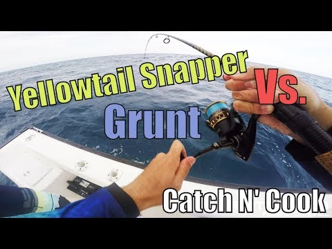 Yellowtail Snapper vs Grunt | Key Largo Offshore catch n coo