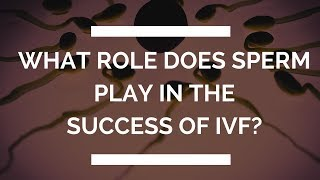 What Role Does Sperm Play In The  Success Of IVF?  The Zita West Clinic