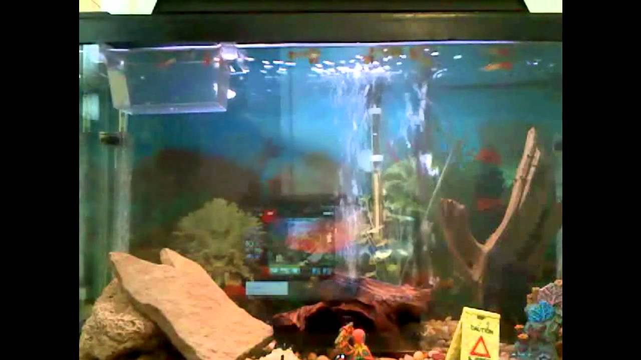 Air bubble fish tank youtube for Fish tank youtube