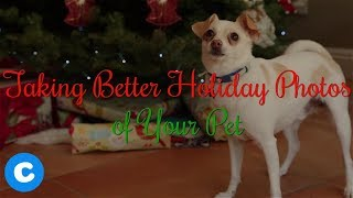 4 Tips for Taking Better Holiday Photos Of Your Pets | Chewy