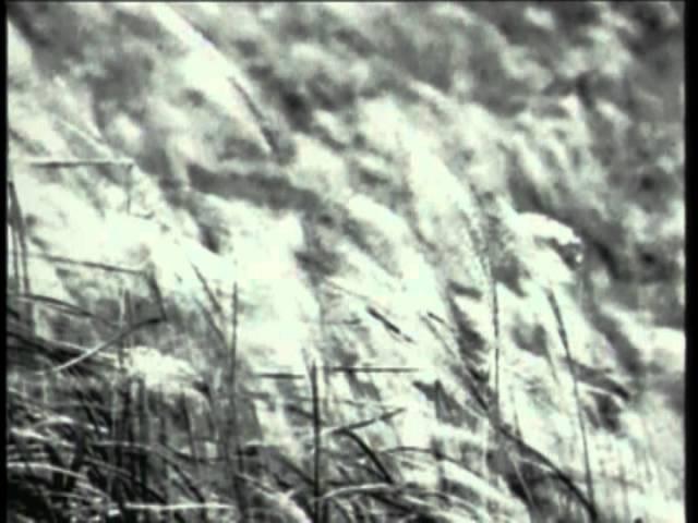 那英 - 白天不懂夜的黑 (官方版MV)