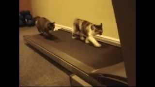 cat using treadmill watch cats exercise