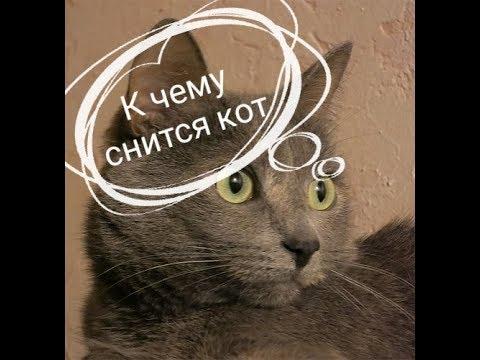 к чему снятся коты.Сонник от Ирины