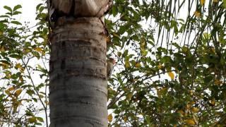 Video Woodpecker pecking tree download MP3, 3GP, MP4, WEBM, AVI, FLV Oktober 2018