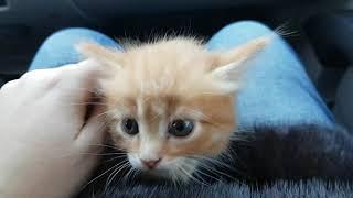 Нашли маленьких котят. Поиски мамы кошки
