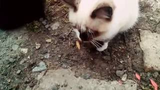 Мои любимые котята