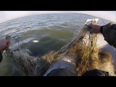 Полные сети рыбы. Наглость Браконьеров и Бездействие Рыбоохраны.
