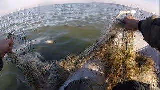 Полные сети рыбы Наглость Браконьеров и Бездействие Рыбоохраны
