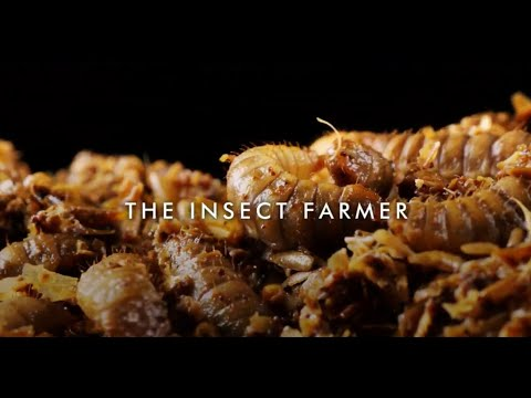 The Insect Farmer