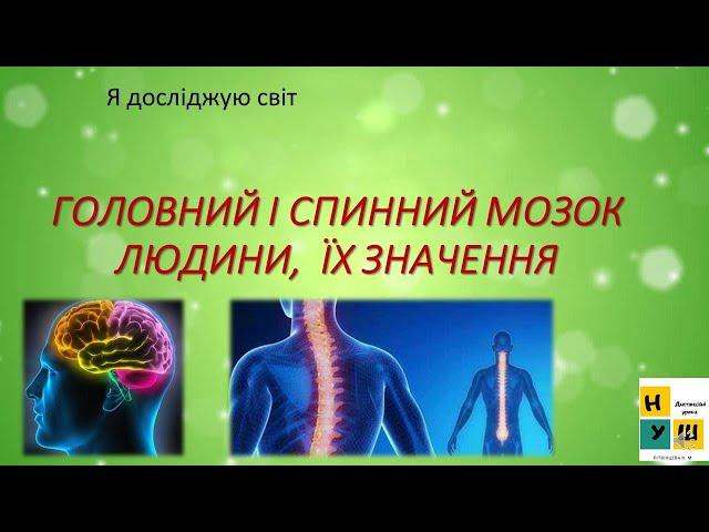 3 клас. Я досліджую світ.  Головний і спинний мозок людини , їх значення.