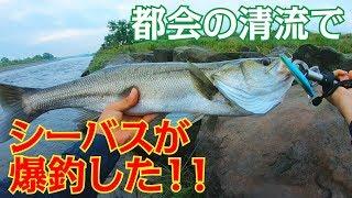 3年前以上前からこの時期(初夏)だけ訪れるシーバスの釣り場。 遊漁券...