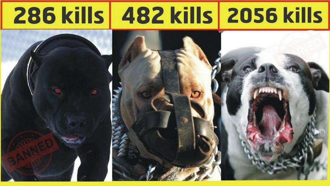 दुनिया के सबसे खतरनाक कुत्ते | Top 10 dangerous dog breeds in the world 2020 [Hindi]