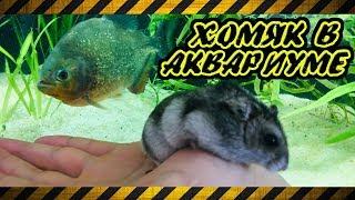 ЗАКИНУЛ ХОМЯЧКА в аквариум ПИРАНИЙ.  Кормление пираний грызунами.  Хомяк против таракана 😲