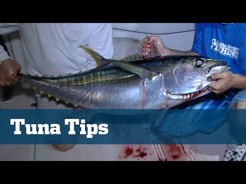 Tuna Season In The Bahamas Is On Fire Brush Up On Your Skills Here And Now