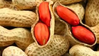 Арахис польза | жареный арахис польза и вред, арахис противопоказания