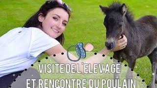 [Vlog]: Visite de l'élevage et rencontre du poulain